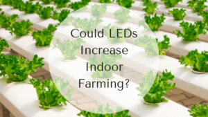 Could LEDs Increase Indoor Farming?