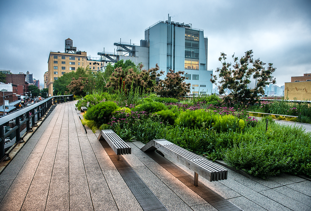 Early Morning On The High Line
