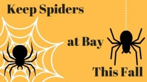 keep spiders at bay blog image