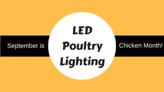 LED poultry lighting