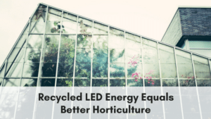 LEDs and horticulture