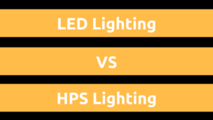 LEDs vs HPS Lighting