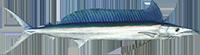 01a561d8 Shortbill Spearfish