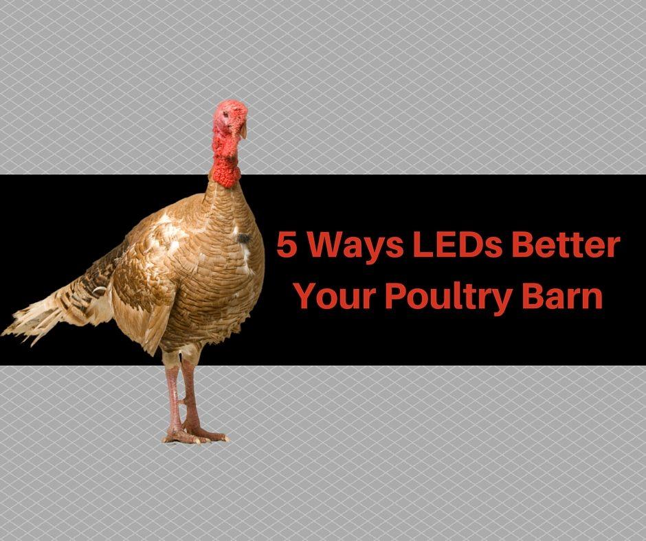 LED poultry lights