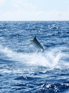 Boom Boom Sports Fishing, Hawaii 12