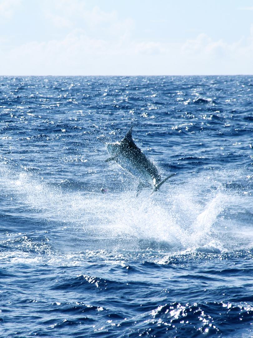 Boom Boom Sports Fishing, Hawaii