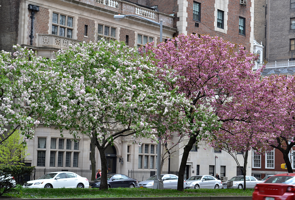 Trees On Park Avenue On The The Upper East Side
