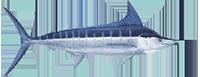 7d61f7eb Stripedmarlin Large E1531996195981