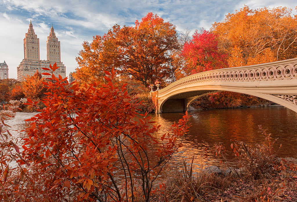 Bow Bridge Autumn Central Park