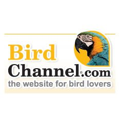 Birdchannel.Com Logo