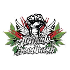 Cannabis-Seeds-Bank.Co.Uk Logo